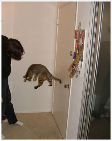 Jumping and Flying Cats (58 pics)