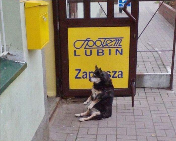 Sitting Dog (4 pics)