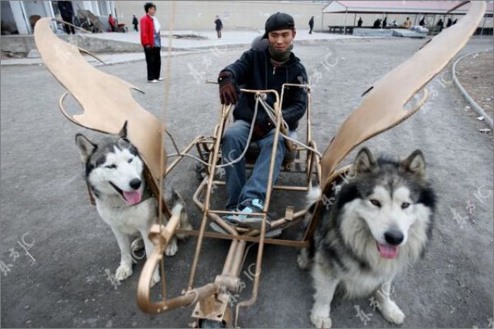 Huskies-Powered Sleds in China (10 pics)