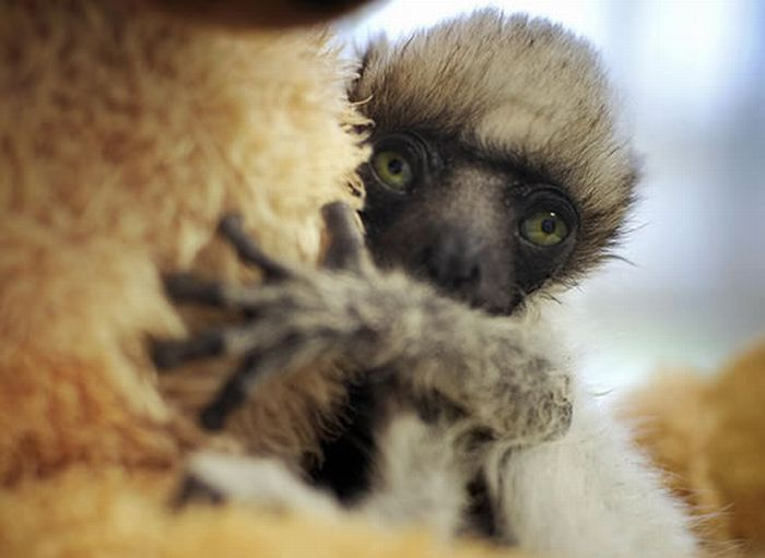 Baby Animals That Look Cute and Ugly (55 pics)