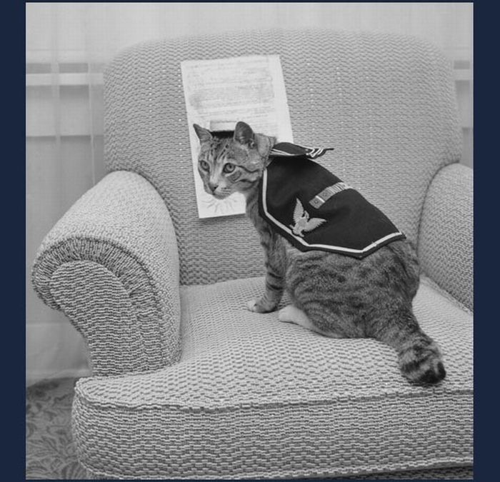 Cats in the Navy (14 pics)