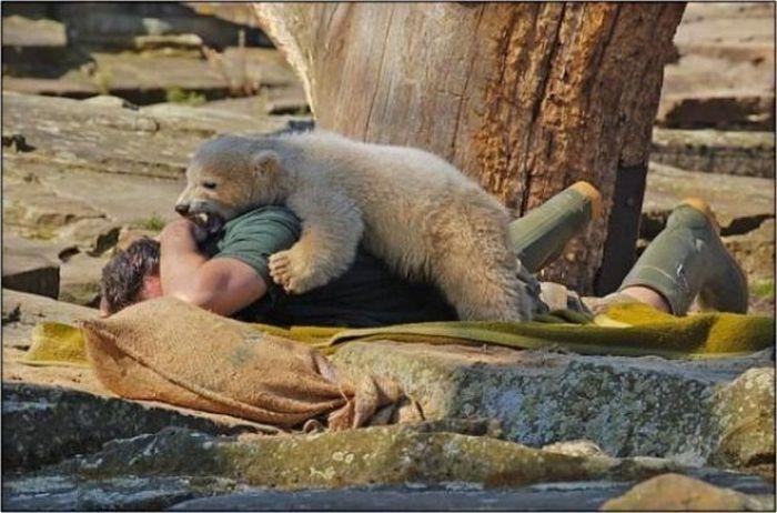 People vs Animals (44 pics)