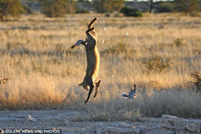Wildcat Fail (4 pics)