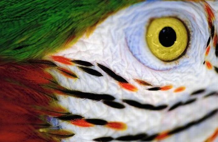 Guess the Animal (25 pics)