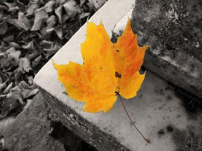 Beautiful Partial-Color Photos (33 pics)