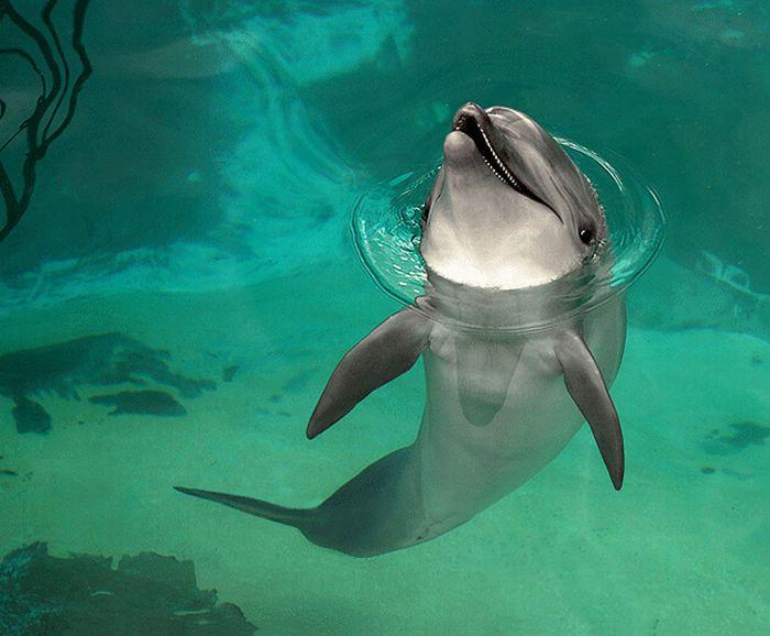 Amazing Animal Photos (27 pics)