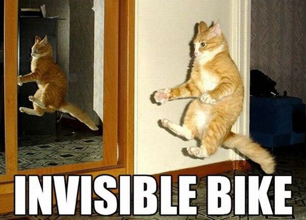 Cats and Invisible objects (25 pics)