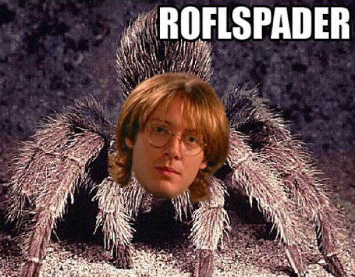 ROFL Spiders (52 pics)