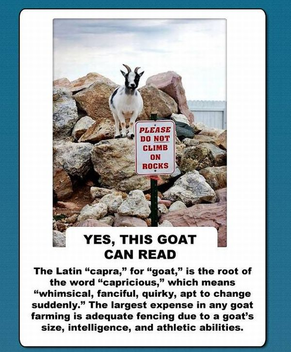 The Truth About Goats (10 pics)