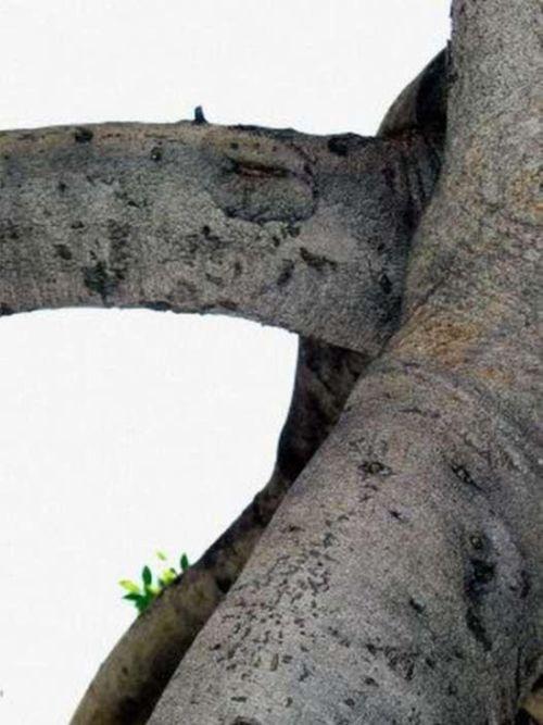 Sexy Trees (27 pics)
