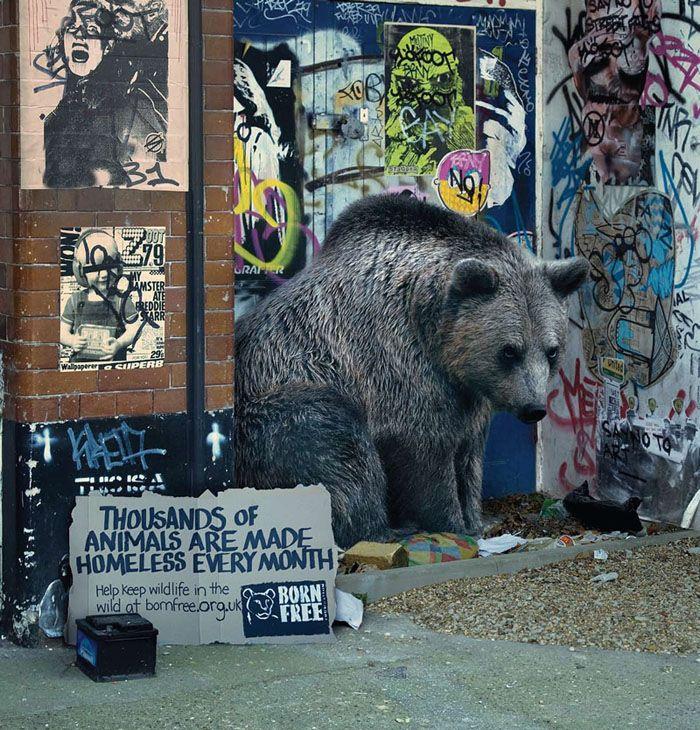 Keep Wildlife in the Wild. Creative Ad (7 pics)