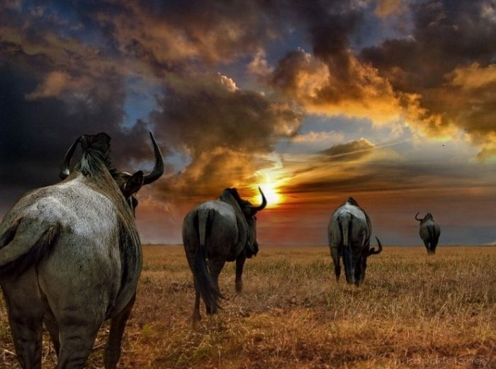 Beautiful Photos of Africa (26 pics)