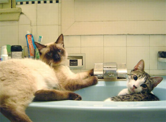 Cats in Sinks (33 pics)