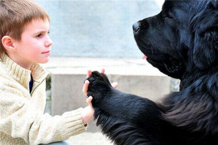 Volim te kao prijatelja, psst slika govori više od hiljadu reči - Page 2 Animals_giving_high_five_28