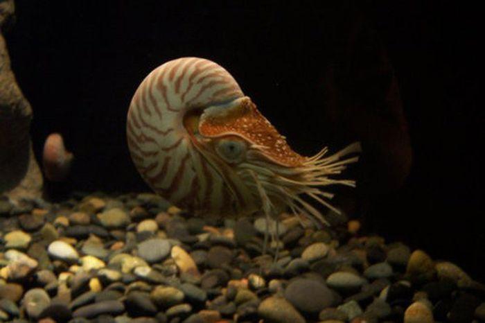 Beautiful Underwater Photos (40 pics)