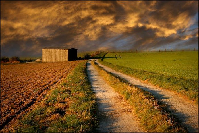 Fields (28 pics)