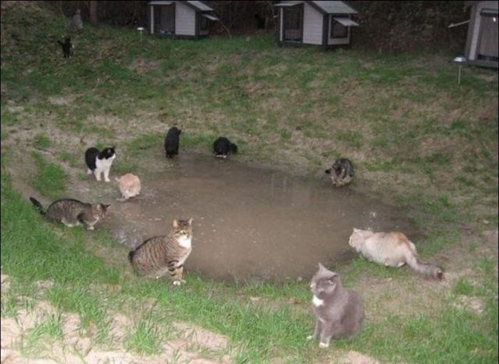 New Home for Homeless Cats (42 pics)