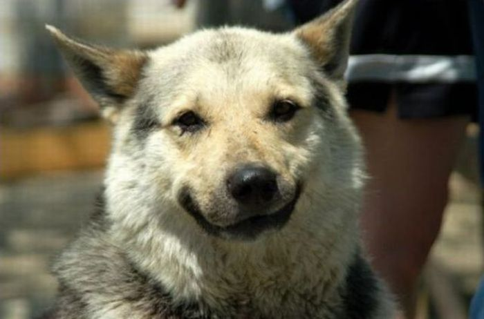 The Most Hilarious Animal Emotions (60 pics)