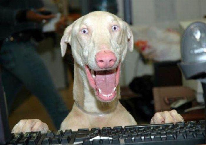 Dog playing video game