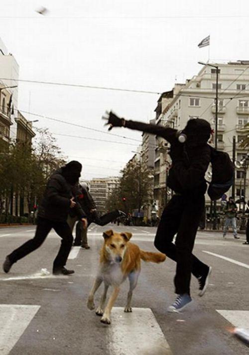 Riot Dog (27 pics)