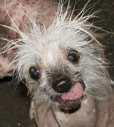 Ugly Dogs (18 pics)