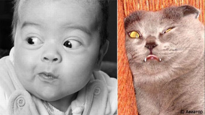 Totally Look Alikes Part III (23 pics)