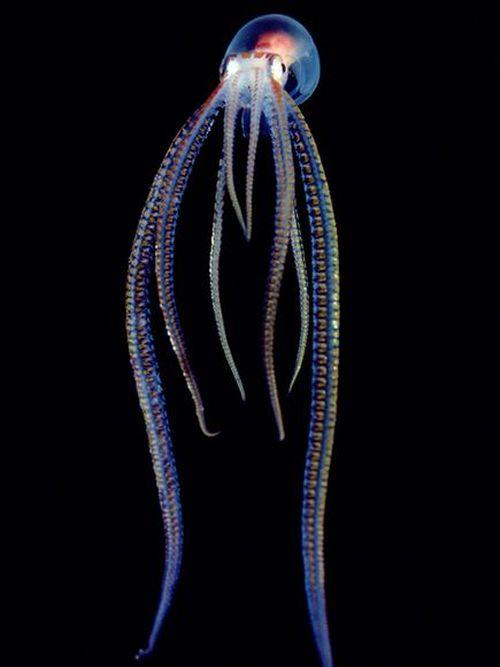 Translucent Creatures (15 pics)
