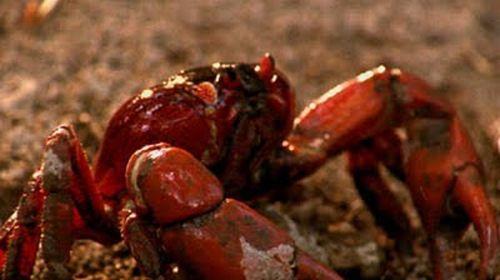 Crab Invasion (20 pics)