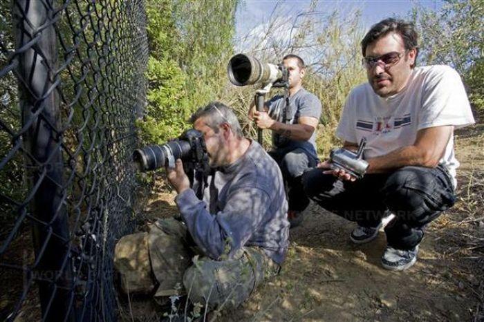Difficult Life of Paparazzi (42 pics)