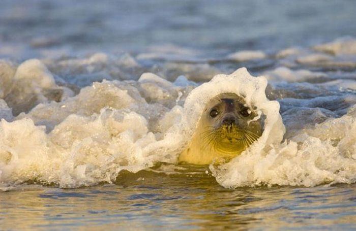 Beautiful Photos of Animals and Nature (67 pics)