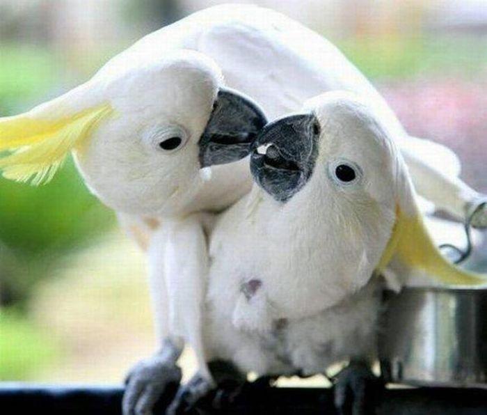 True Love (19 pics)