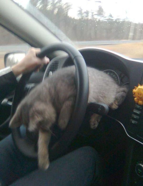 A GPS Cat (6 pics)