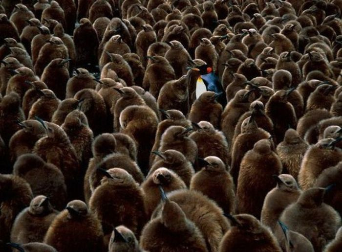 Amazing Multitude Of Objects and People (59 pics)