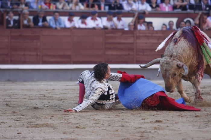 When a Bull Strikes Back (5 pics + video)