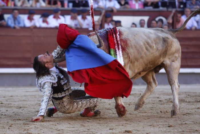 When a Bull Strikes Back (5 pics + video)