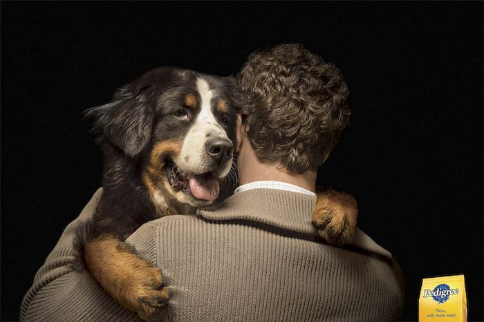 The Best Ads with Dogs (33 pics)