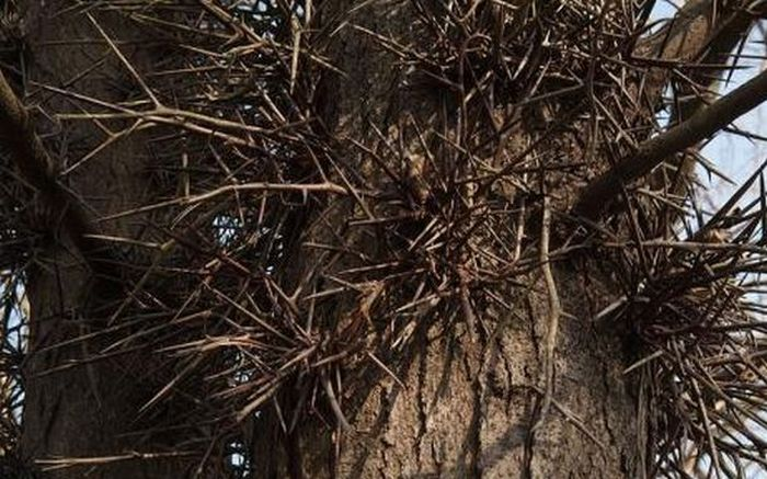 Dangerous Trees (20 pics)