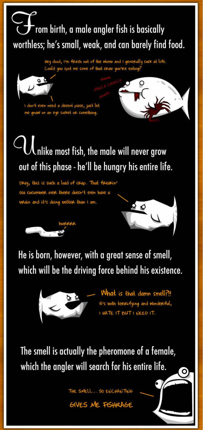 Interesting Facts About Anglerfish (6 pics)