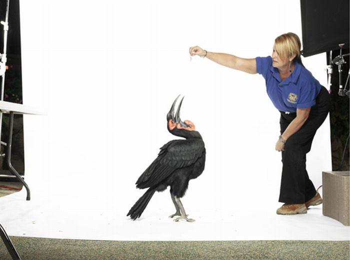Stunning High-Speed Photos of Birds (10 pics)