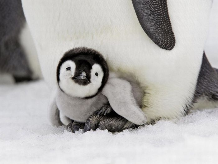 The Cutest Baby Animals (20 pics)