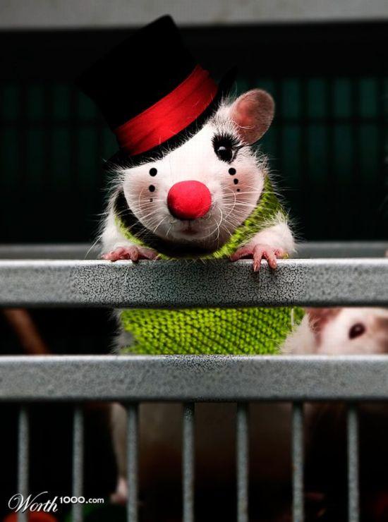 Clown Animals (20 pics)