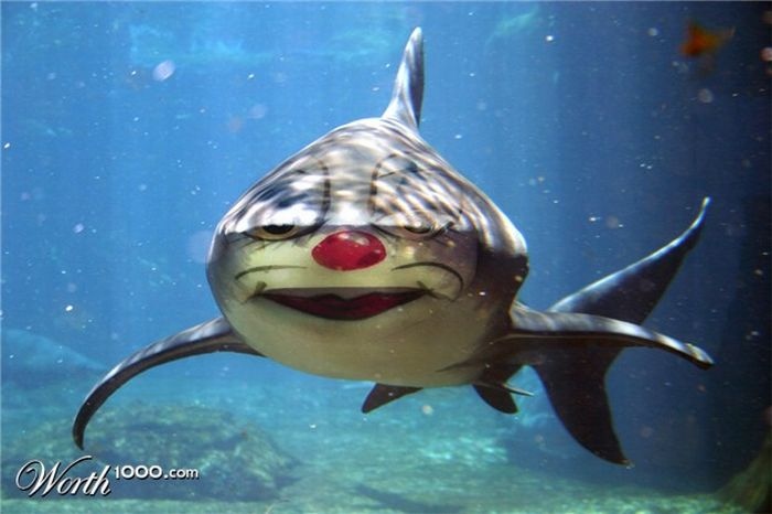 Clown Animals (20 pics)