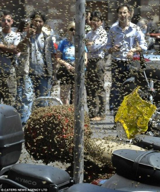 A Scooter Being Attacked by Bees (4 pics)
