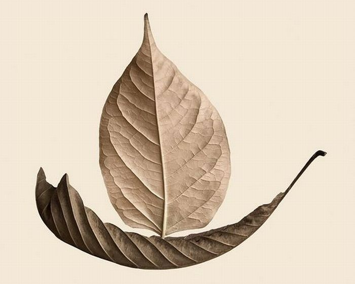 Awesome Dry Leaves Art (18 pics)