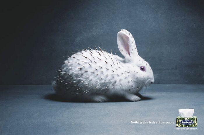 Creative Ads (78 pics)