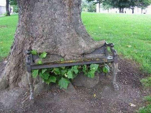 Power of Trees (25 pics)