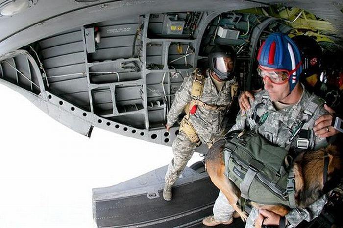 Skydiving Dog (11 pics)