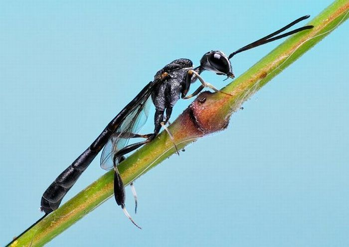 Superb Macro Photos of Insects (22 pics)