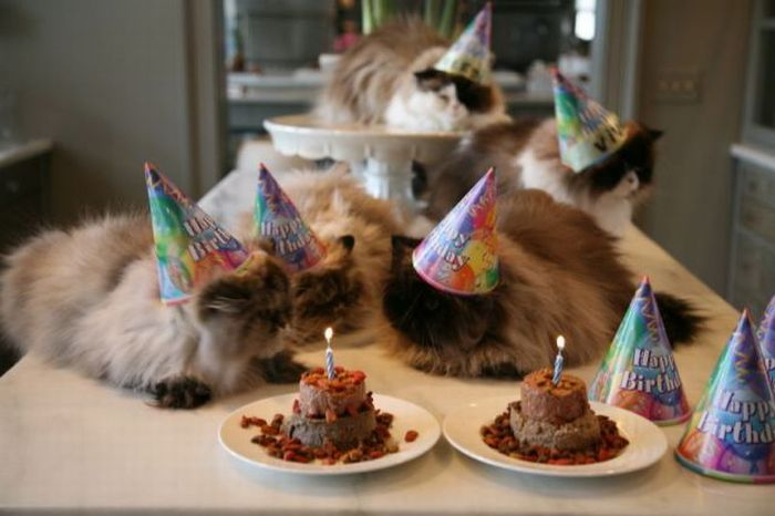 Cats Birthday Celebrations (27 pics)