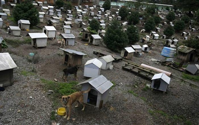 Favela for Dogs in Brazil (7 pics)